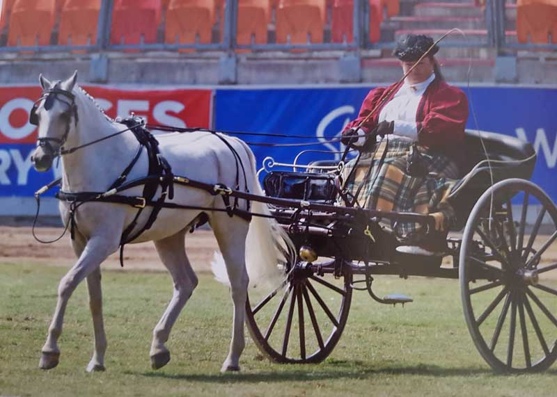 Customer photos wearing Horse and Carriage